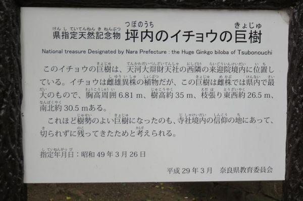 5 (800x533).jpg