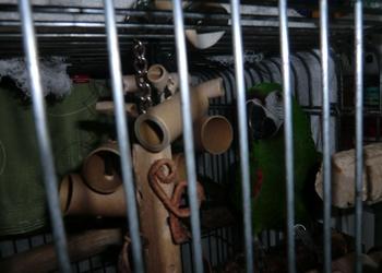 シオンのおもちゃ.JPG