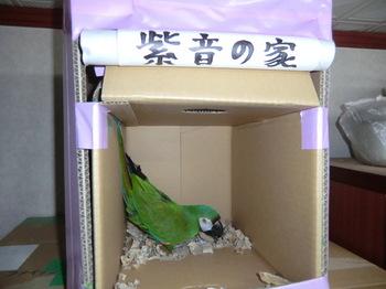 紫音の家2.JPG